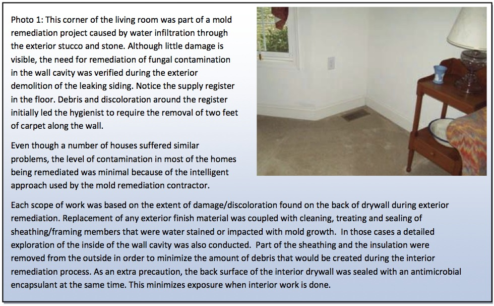 Understanding the Process of Mold Remediation | Surviving Mold